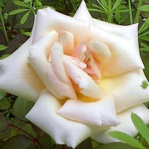 Aprilmid_2008_003_2